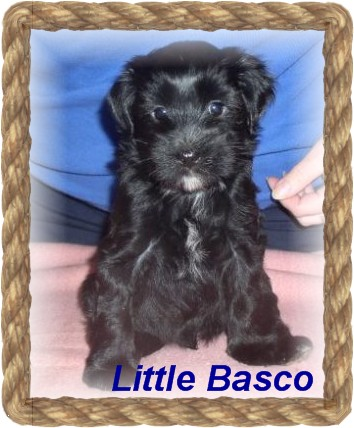 little basco-angebot-1